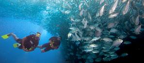 plongeur avec un banc de poisson