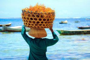 Culture des algues à Nusa Penida