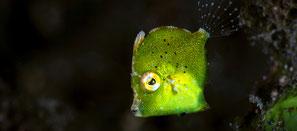 Spécialité PÄDI identification de poisson à Nusa Penida
