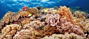 photo de coraux pour la spécialité Padi coral conservation à Nusa Penida