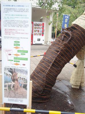 2012年11月(第29回全国都市緑化フェアの為展示)