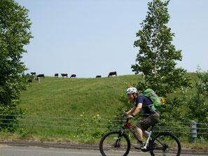 牛に見送られながら坂道を登ります
