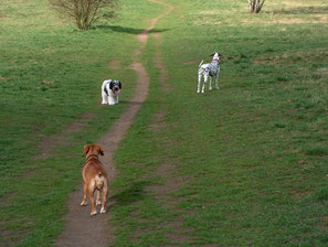 Die erste Begenung zwischen Folly und Ginger - beide verlangsamen ihre Bewegung bis fast zum Stillstand.