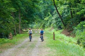 Balade à vélo en forêt de landes