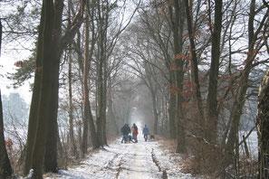 Starten Sie die Weihnachtsfeier im Umland von Celle mit einer Winterwanderung und Glühweinempfang.