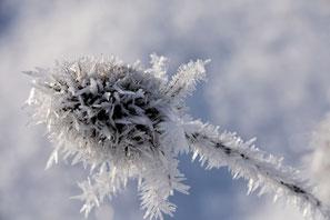 Natur winter herbst saison fotos lizenzen