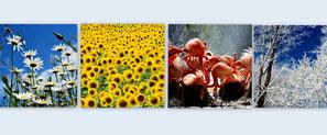 Blumen Tiere Landschaft karten