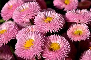 Blumen Blühen Natur