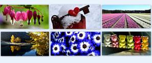 Foto-Grusskarten 20 x 9,5