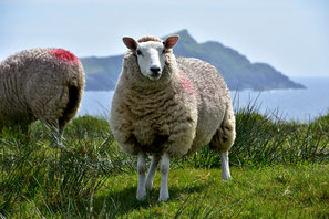 Grüne Insel Irland Natur