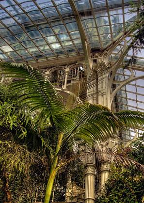 das Palmenhaus III