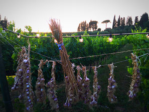 Lucca biodinamica. Etesiaca itinerari di vino. BLOG