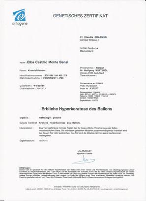 Elba ist homozygot gesund