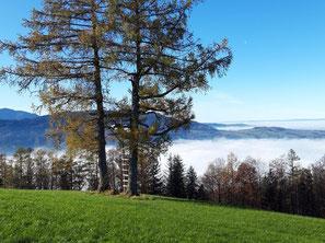 Grillenparz Gipfel über Schlierbach