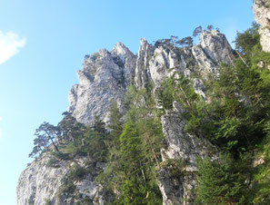 Felsformationen der Kaltenbachwildnis, Schlosskogel und Adlerhorst