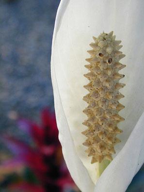 fleur de lune - Lyzzz