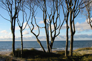 Strand - Bäume - Region Prerow - Carpe Diem - Prerow - Bio-Hotel