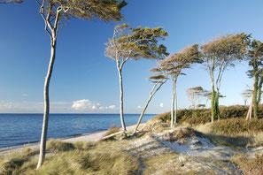 Weststrand - Region Prerow - Windflüchter - Carpe Diem - Prerow - Bio-Hotel