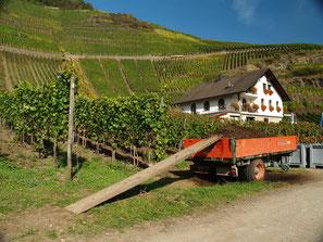 Der Rotweinwanderweg läßt sich vom Weingut Mönchberger Hof sehr gut erreichen..
