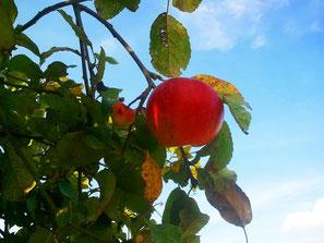 Wetterau, Apfelwein,Äpelwoi