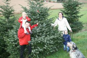 Weihnachtsbaum Selber Fällen.Weihnachtsbäume Original Nordmanntanne Aus Oberkirch