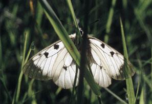 """Papillons """"de jour"""""""