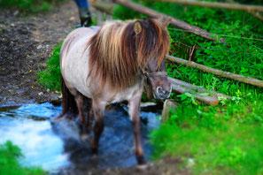 Unser Pferd Stella