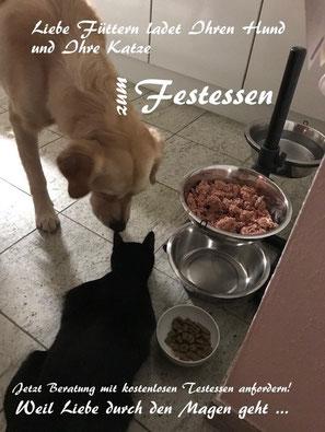 Es gibt nur einen wirklich kompetenten, unabhängig und unbestechlich Prüfer für naturbelassenes, artgerechtes, gesunde Haustierfutter von Reico - Ihren Hund und Ihre Katze!
