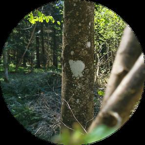 Waldraeume_by_Karibu-Living_Kurse-Angebote