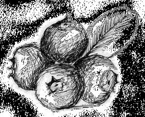 sirop d agave prix
