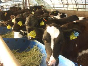遺伝子情報やストレス値などを解析し,飼養・加工過程におけるリスクについて評価します.