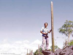 Siccobaccatus estevesii, Goias, ca 1972