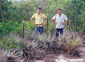 Pilosocereus jauruensis, together with Dr. Richard Esteves, Mato Grosso do Sul 1988 / Pilosocereus jauruensis, junto com Dr. Richard Esteves, Mato Grosso do Sul 1988