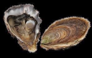 Huîtres fines de Cancale, huitre fine de Cancale