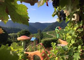 Die Förster´s Weinterrassen liegen direkt am Rotweinwanderweg.