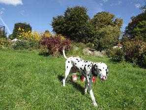 inRide-Hundereporter Charly leckt sich genussvoll die Schnauze: hmmm….lecker…..