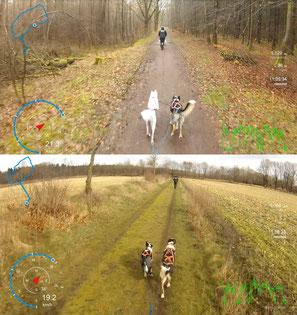 oben: Frosty mit Ayla; unten: Smacks mit Sitka - die allerersten Läufe