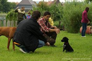 Hundeerziehung einfühlsam und effektiv
