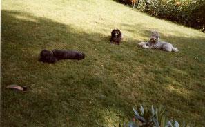 Gina, Gypsi und Maleika