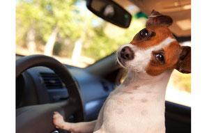 Gerne hole ich Ihren Hund ab und bringe ihn nach dem Besuch im Hundesalon wieder zu Ihnen zurück.