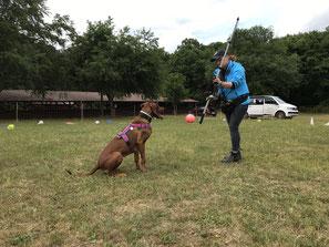 Hundeschule, Hundetraining, Hundeschule Butzbach, Socialwalks