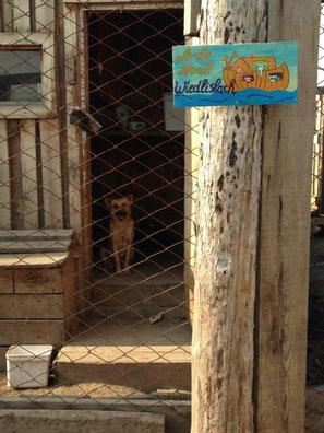 """""""Dankesschild"""", das in Sibirien am Tierheim angebracht wurde."""