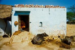 Bauernhaus mit Kuh