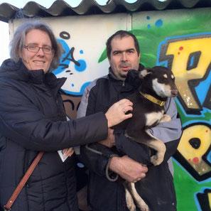 adoption chiot refuge - Bréhand (22) - Bretagne