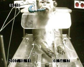Als »Trainingsmethode« wird Durst eingesetzt. Die Affen erhalten für kooperatives Verhalten ein paar Tropfen (weniger als ein halber Milliliter) Wasser oder Saft über einen Schlauch in den Mund eingegeben. Außerhalb der Experimente erhalten sie nichts zu