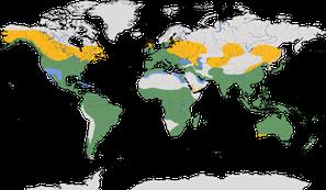 Karte zur Verbreitung der Familie der Eisvögel (Alcedinidae)