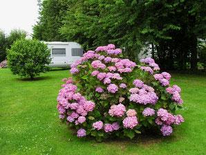 Camping des Hortensias Picardie