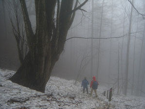 体験の森 活動の広場近く