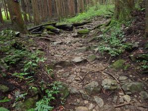 沢筋の登山道