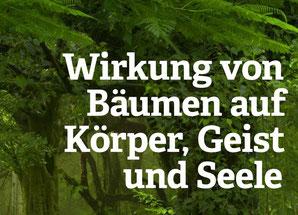 Kraftquelle Holz-56-seitige PDF der Solarholzbauer.ch